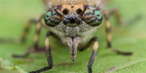 Colourful fly eyes